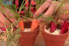Carrot Pots