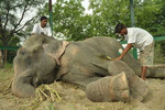 Raju is now recieving medical treatment