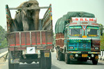 Raju on his way to freedom